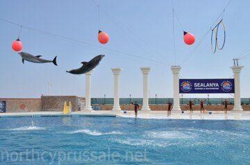 Дельфинарий в Алании, Sealanya Dolphinpark